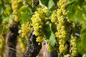 wine-3646190_640